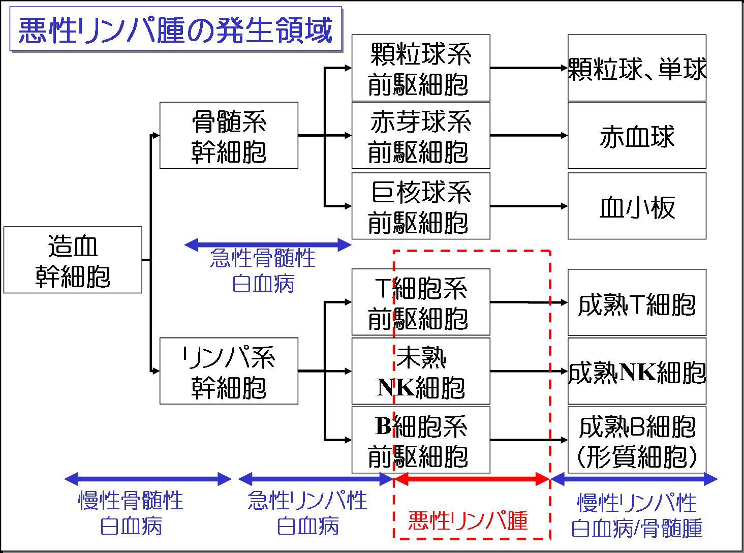 びまん性大細胞性悪性リンパ腫 - JapaneseClass.jp
