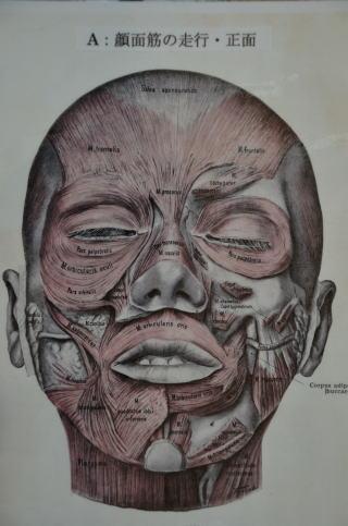 顔面 麻痺 マッサージ